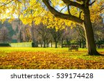 Autumn Park Bench Landscape