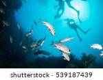 soft corals and yellow fish... | Shutterstock . vector #539187439