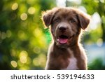 Stock photo portrait of happy brown cute labrador retriever puppy with foliage bokeh background head shot of 539194633