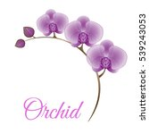 vector card with decorative... | Shutterstock .eps vector #539243053