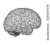 human brain icon in monochrome... | Shutterstock .eps vector #539247478