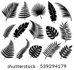 set of tropical leaves. vector | Shutterstock .eps vector #539294179