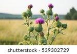 Milk Thistle Plant Herbal...