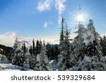 A Snowy Pine Forest Above The...