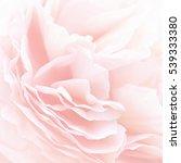 unfocused blur rose petals ... | Shutterstock . vector #539333380
