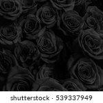 dark roses background. greeting ... | Shutterstock . vector #539337949
