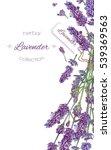 vector lavender flower elegant... | Shutterstock .eps vector #539369563