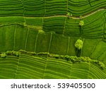 aerial view of the green rice... | Shutterstock . vector #539405500