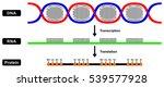 vector formation of mrna rna... | Shutterstock .eps vector #539577928