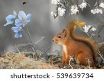 Red Squirrel Standing With Blu...