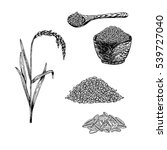 hand drawn set of rice. retro... | Shutterstock .eps vector #539727040