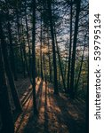 sunset into the canadian forest | Shutterstock . vector #539795134
