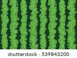 green watermelon realistic... | Shutterstock . vector #539843200