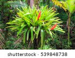 Beautiful Bromeliad  Bromelia ...