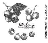 blueberry   fruit vector... | Shutterstock .eps vector #539856859