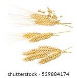 Wheat Oat Ears Set 4 Isolated...