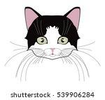 Cat Cute Head. Face Kitten ...