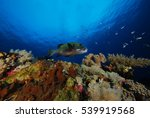 hawk fish on hard coral | Shutterstock . vector #539919568