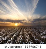cotton field in lubbock  texas  | Shutterstock . vector #539966746