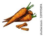 carrot hand drawn vector... | Shutterstock .eps vector #539995894