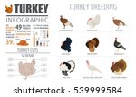 poultry farming infographic... | Shutterstock .eps vector #539999584
