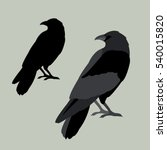 Raven Vector Illustration Styl...