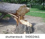 Damaged Tree Disaster  In...