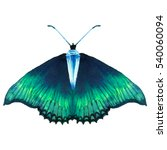 watercolor green butterfly with ... | Shutterstock . vector #540060094