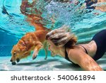 Stock photo underwater action smiley woman play with fun training golden retriever puppy in swimming pool 540061894