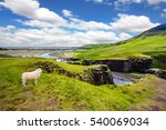 white sheep grazing on the... | Shutterstock . vector #540069034