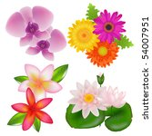 set of flowers  orchid ... | Shutterstock .eps vector #54007951