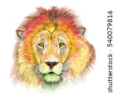 lion head illustration | Shutterstock . vector #540079816