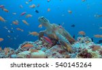 green sea turtle on a colorful... | Shutterstock . vector #540145264