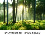 morning in the forest | Shutterstock . vector #540155689