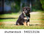 adorable german shepherd puppy... | Shutterstock . vector #540213136