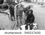 Stock photo dogs in the city 540217630