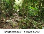 Stream In The Tropical Jungle