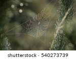 dew on web. morning. | Shutterstock . vector #540273739
