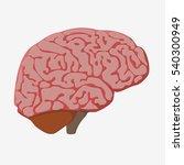 the brain. flat design style.... | Shutterstock . vector #540300949