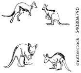 kangaroo. a sketch by hand....   Shutterstock .eps vector #540306790