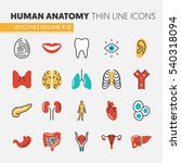 anatomy thin line vector icons... | Shutterstock .eps vector #540318094