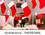 santa french bulldog in studio | Shutterstock . vector #540381886