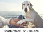 dog's paw and man's hand... | Shutterstock . vector #540403528