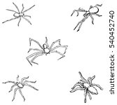 Spiders. A Sketch By Hand....