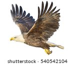 Bald Eagle Winged Flying Hand...