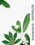 Green Leaf On White Background. ...