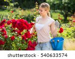 Stock photo portrait of cheerful female gardener planting and trimming blossoming bush roses in yard 540633574