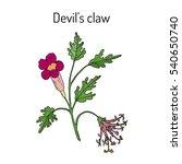 devil's claw  harpagophytum...   Shutterstock .eps vector #540650740