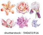 Set With Flowers. Rose. Iris....