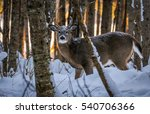 Photography Of A Young Deer...